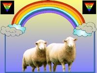 gay sheep